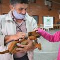 Abertas inscrições para castração de cães e gatos na Figueira e João Pessoa