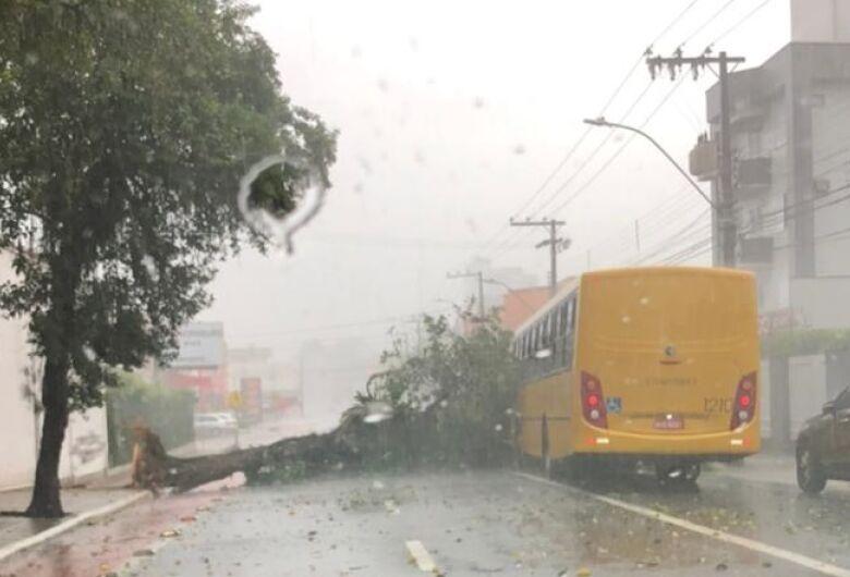 Árvore cai e interdita parte da Marechal, no centro de Jaraguá