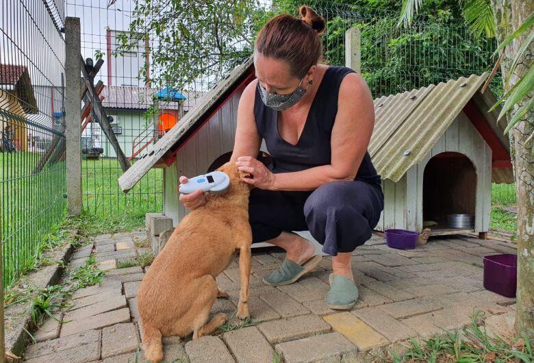 Fundação do Meio Ambiente realiza campanha focada no bem-estar animal em Guaramirim