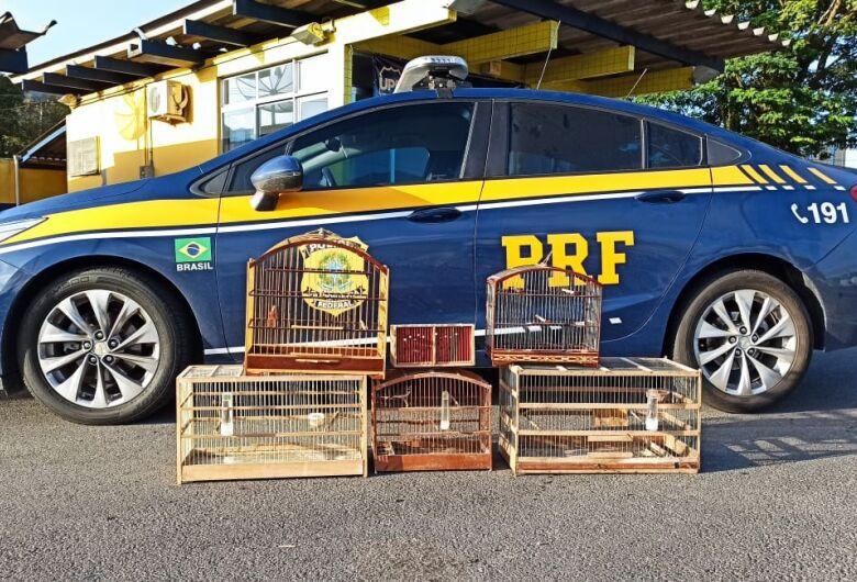 PRF flagra pássaros silvestres no porta-malas de carro na BR 280 em Guaramirim