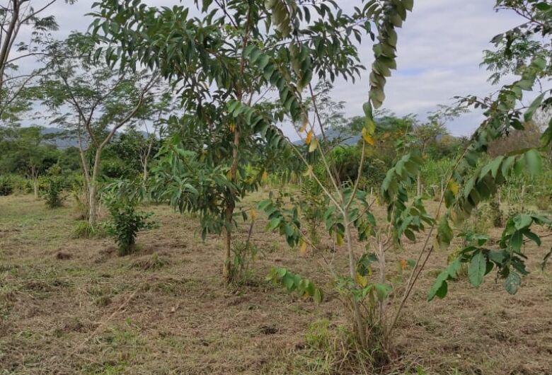 Samae faz manutenção de áreas do programa Mata Ciliar