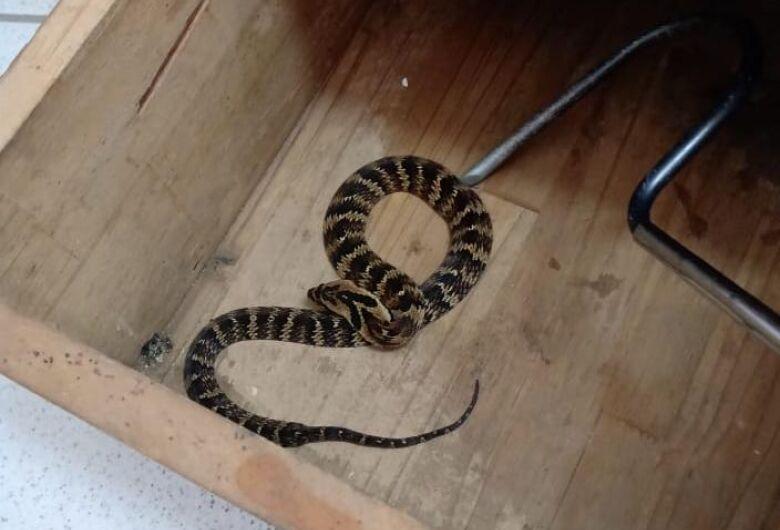 Cobra é capturada dentro de escola em Guaramirim