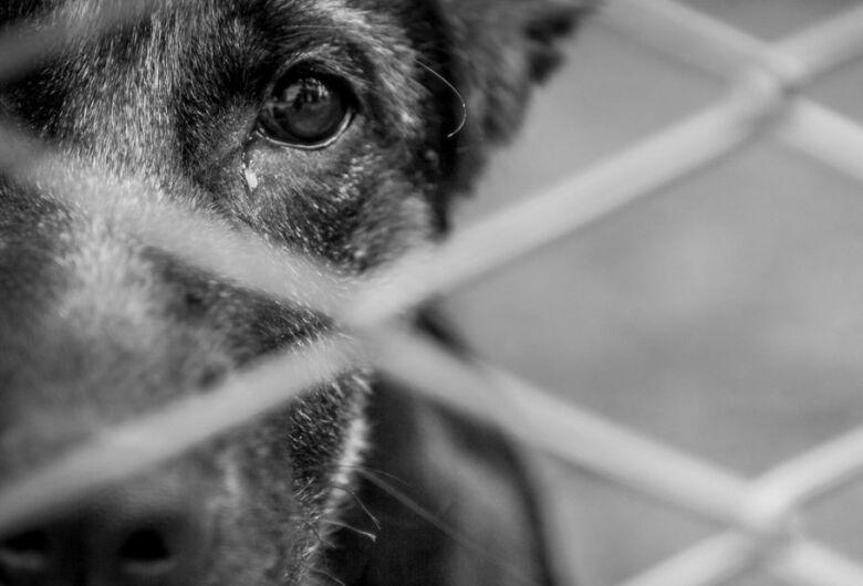 Mulher é denunciada por maus-tratos contra animais em Massaranduba