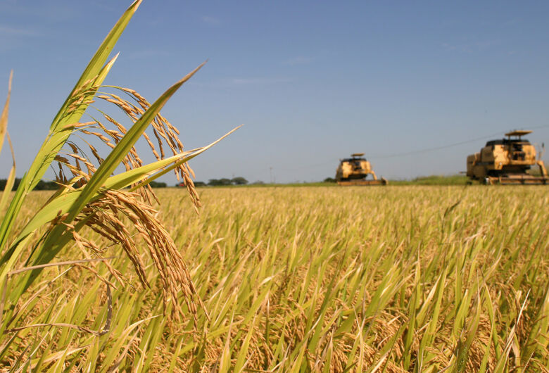 Sicredi fortalece o compromisso com a agricultura familiar em SC