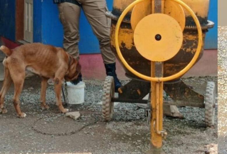 Cães são resgatados após ficar sem água e comida por mais de três dias em Jaraguá