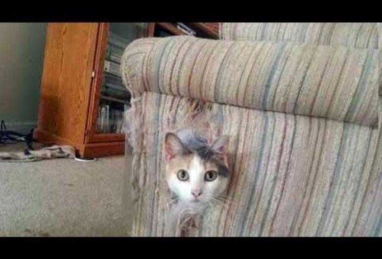 """Gato é """"denunciado"""" após invadir residência e causar sujeira e danos em Guaramirim"""