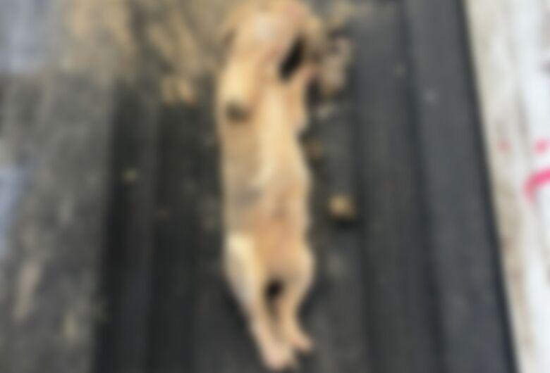 Cães são encontrados mortos em sacos de lixo em Jaraguá