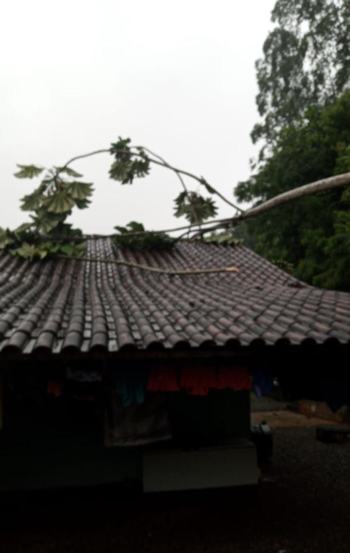 Defesa Civil alerta para risco de deslizamento de terra em Jaraguá  - Crédito: Divulgação