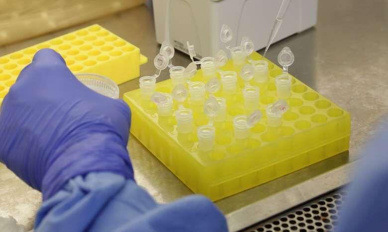 Pesquisadores da UFSC identificam nova variante do coronavírus em morador de Jaraguá - Crédito: Agência Brasil