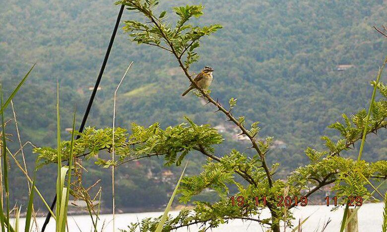 Brasil passa a fazer parte do Protocolo de Nagoia sobre biodiversidade - Crédito: Divulgação/PlantVerd