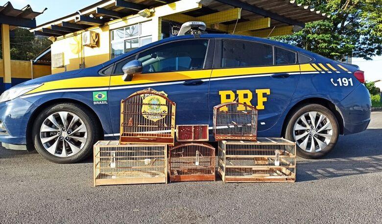 PRF flagra pássaros silvestres no porta-malas de carro na BR 280 em Guaramirim - Crédito: Divulgação PRF