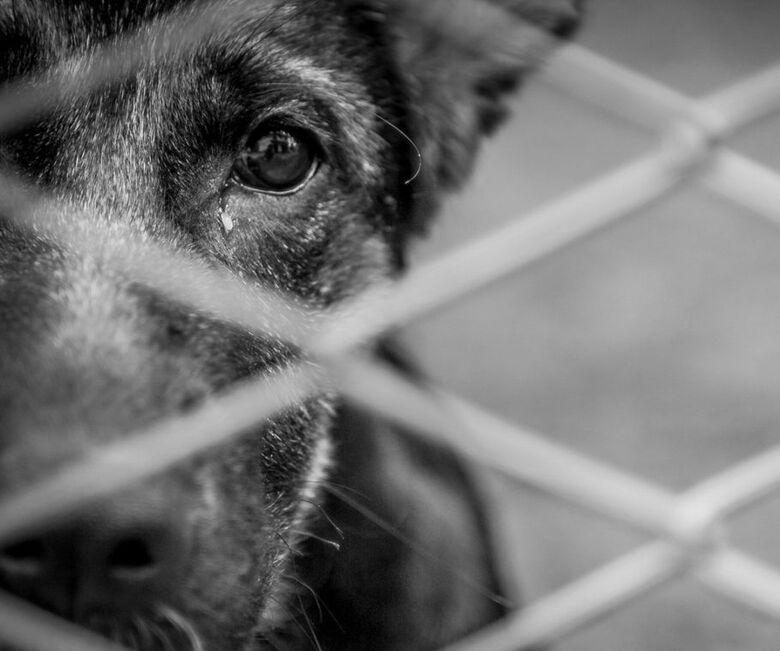 Mulher é denunciada por maus-tratos contra animais em Massaranduba  - Crédito: Foto Internet/Ilustrativa