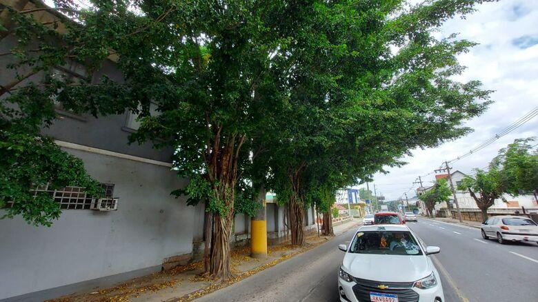 Árvores com risco de queda na Epitácio serão cortadas dia 27 - Crédito: Divulgação