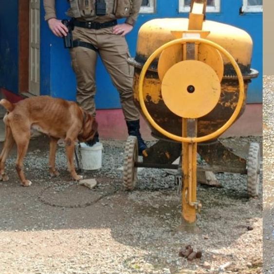 Cães são resgatados após ficar sem água e comida por mais de três dias em Jaraguá  - Crédito: Reprodução / Diário da Jaraguá
