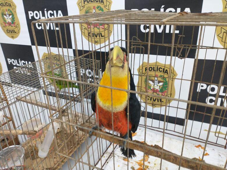Animais silvestres são apreendidos em Joinville - Crédito: Divulgação Polícia Civil.