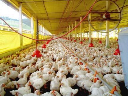 Secretário da Agricultura recebe avicultores
