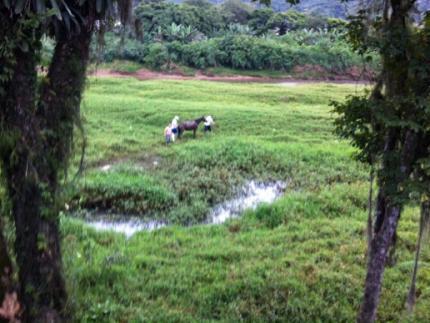 Égua que se atolou em brejo na Figueira é resgatada