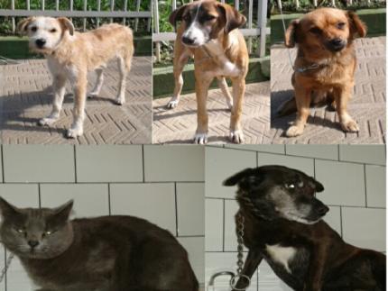 Quatro cães e um gato aguardam adoções