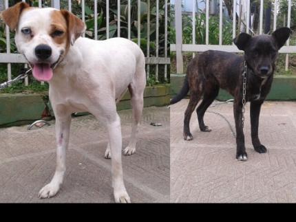 Dois cães aguardam por novos donos em clínica veterinária