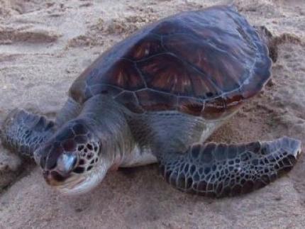 Fundema promete notificar pescadores e apreender redes