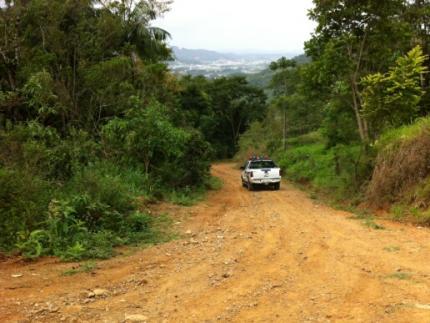 Homens são atacados por abelhas na Ilha da Figueira