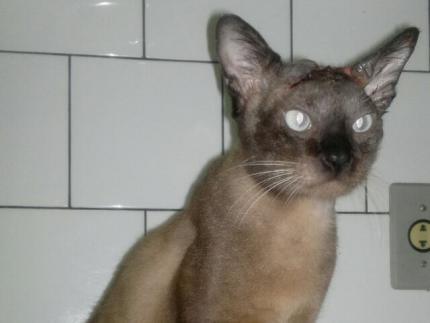 Gato dócil quer ser adotado <br /> <br />
